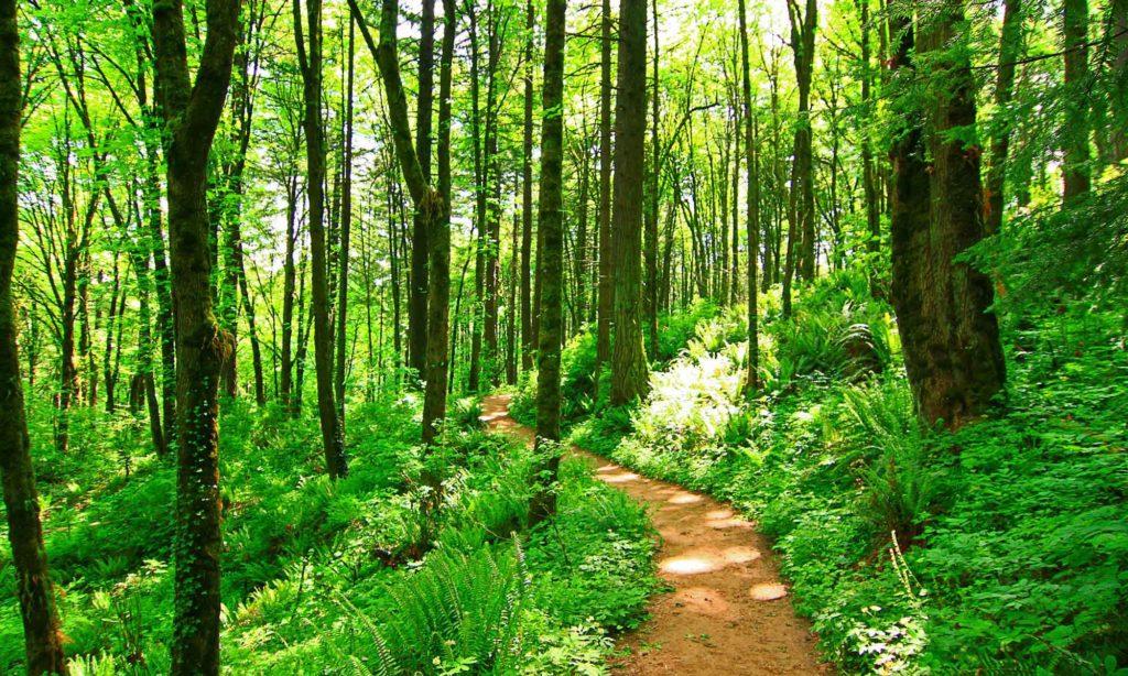 Лес — Википедия